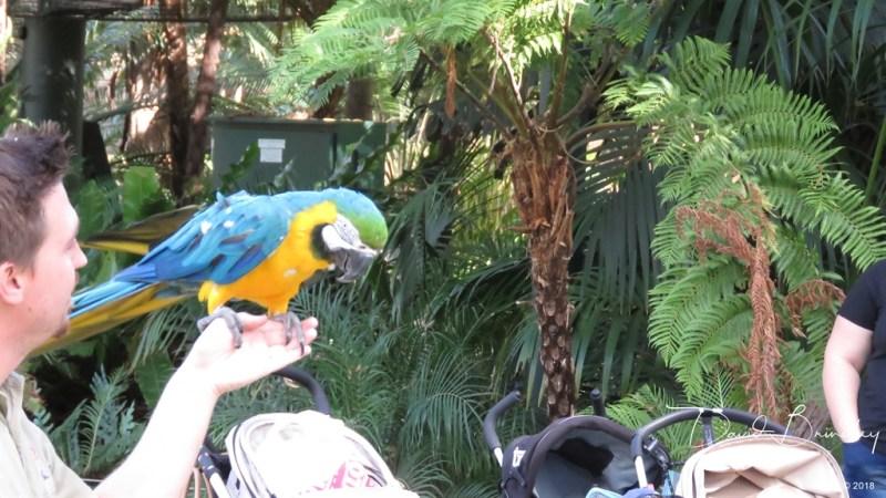Blue Macaw sitting on a hand