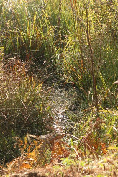 Water among reeds
