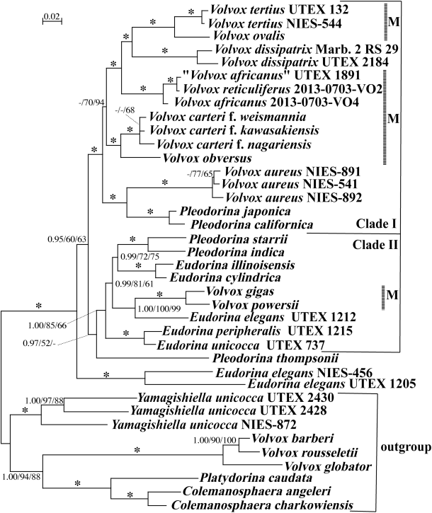 Fig. 2 from Nozaki et al. 2015: Phylogenetic analysis of the Eudorina group, as inferred from 6021 base pairs of five chloroplast genes.