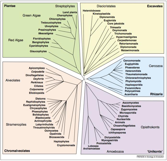 Keeling et al. 2005 Fig. 1