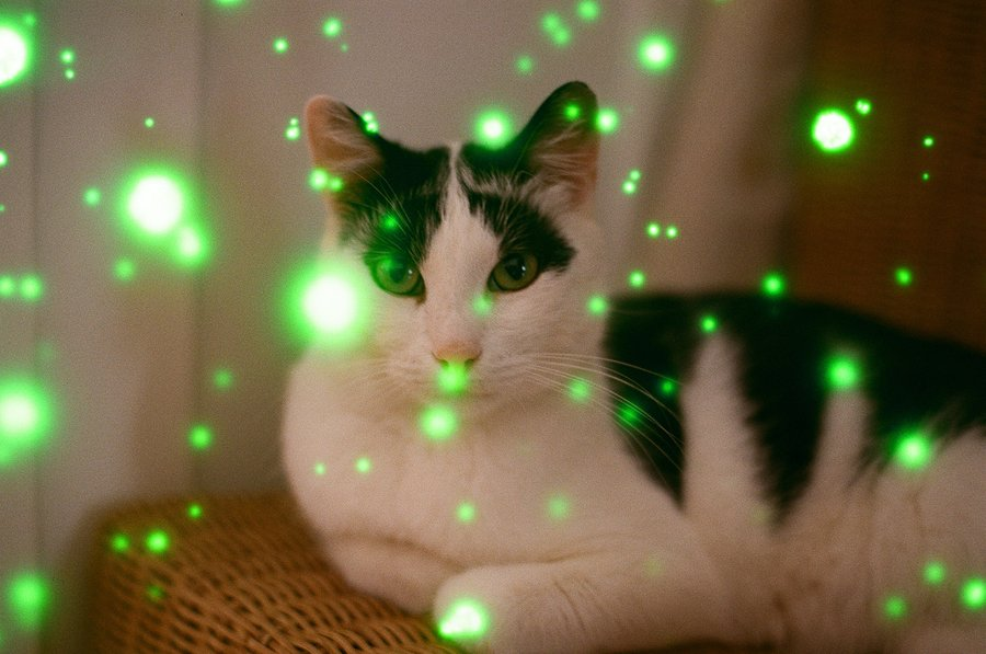 Revolog Volvox cat