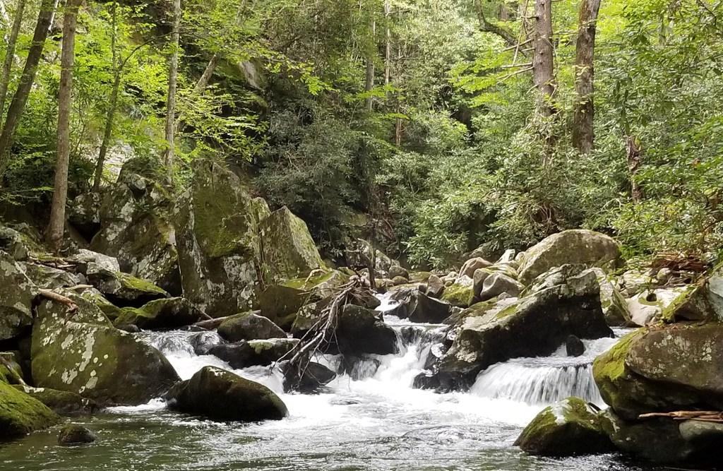 Forney Creek, GSMNP
