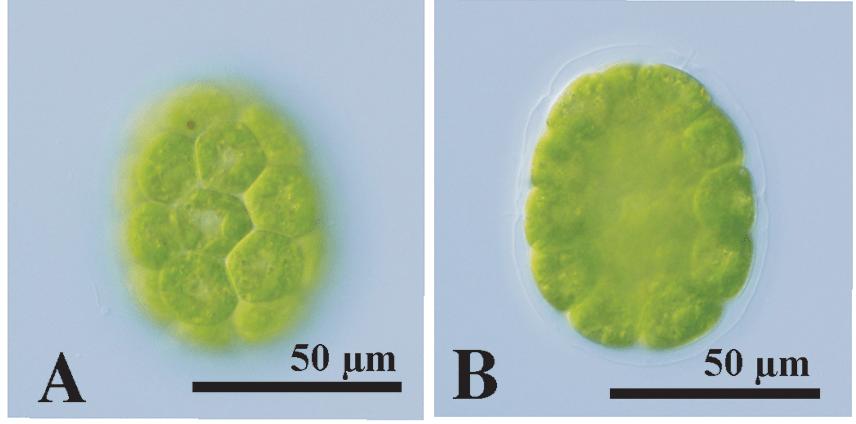 Nozaki et al. 2020 Fig. 2A & B