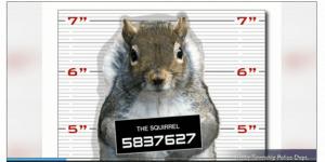 squirrelmugshot