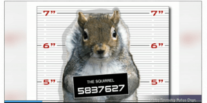 squirrelmugshot