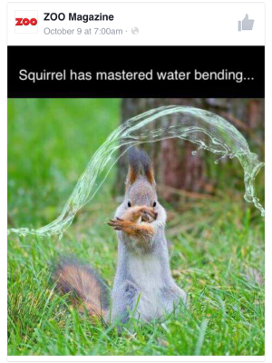 waterbendersquirrel