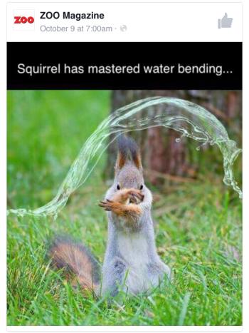 water bender squirrel