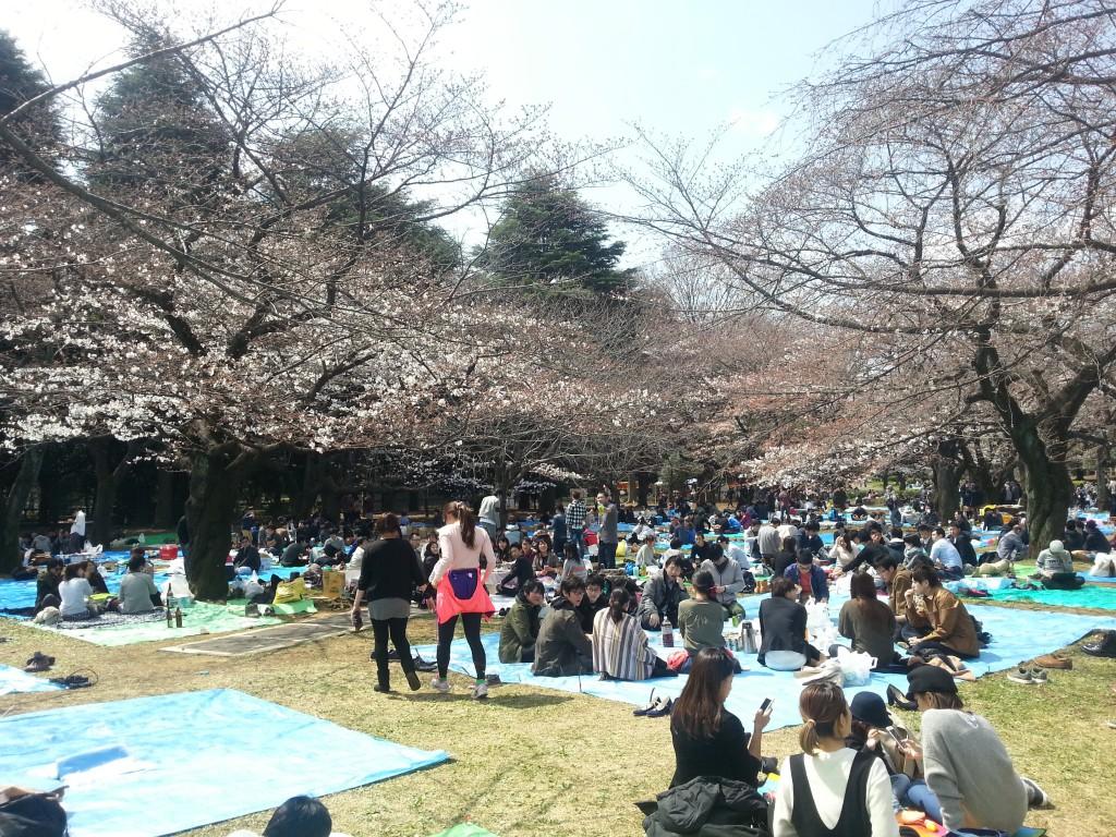 Cherry trees 5