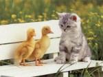 duckskitten