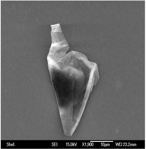 An unknown biological entity isolated from the stratosphere