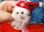Animals Dressed for Christmas