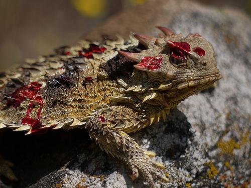 Six Seriously Strange Animal Adaptations