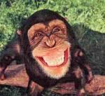happychimp