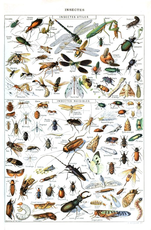 Insects_Larousse