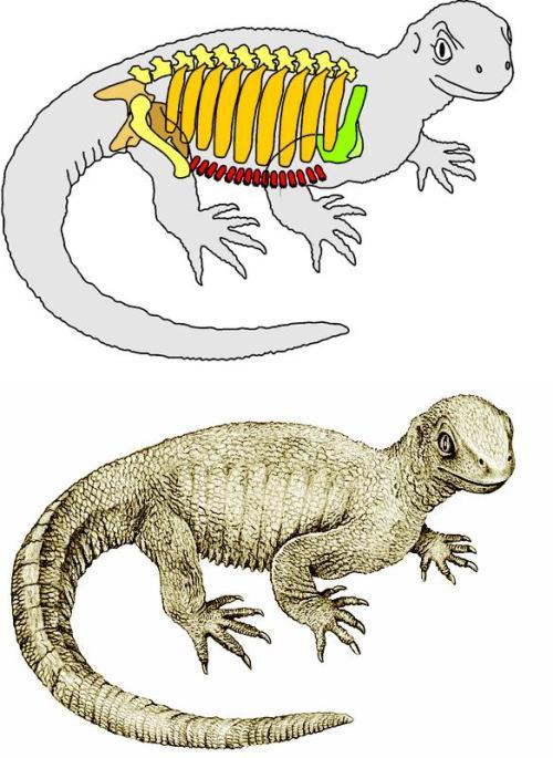pappochelysrecon