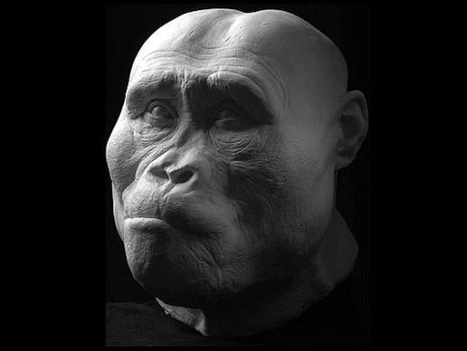 storymaker-early-human-ancestors-faces1-515x388