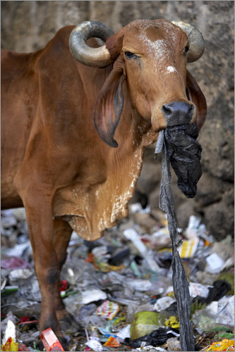 cowplastticbags2