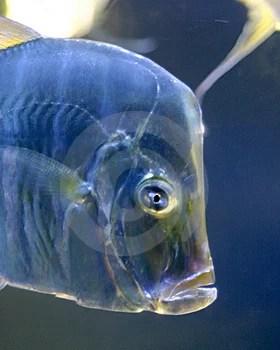 Free Stock Photo - Fish
