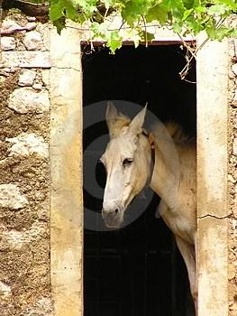 Stock Photo - Mule inside 1