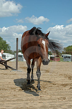 Stock Image - Tired Horse