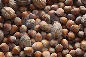 Free Stock Images - Hazel nuts and nuts
