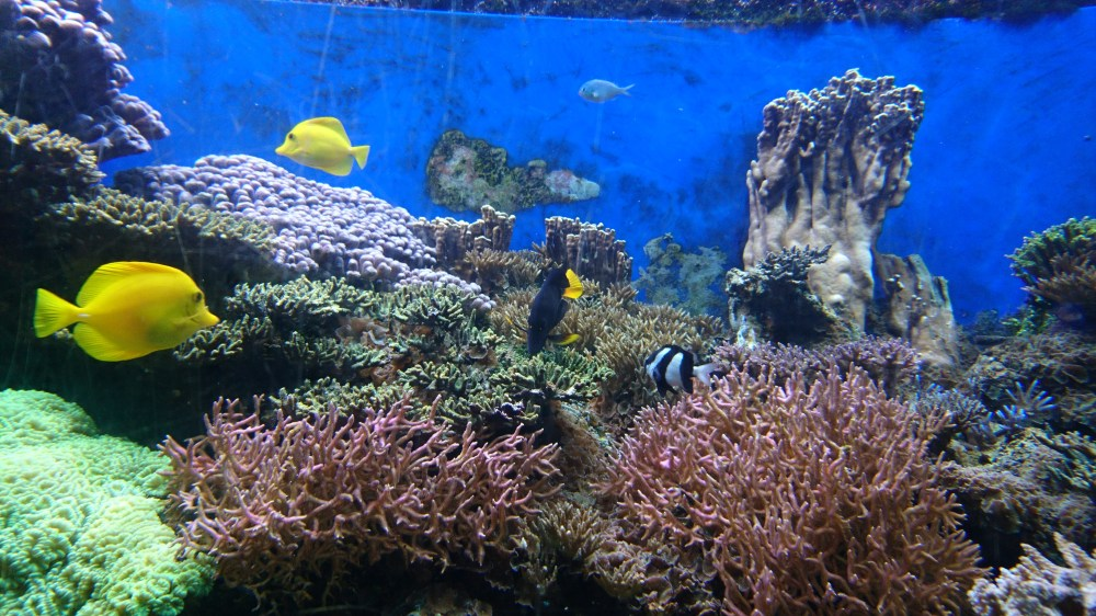 The beautiful aquariums at ZSL London Zoo