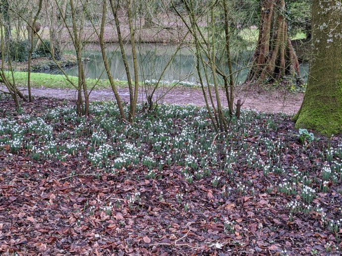 Snowdrops at Stowe | Stowedrops | Free Time with the Kids