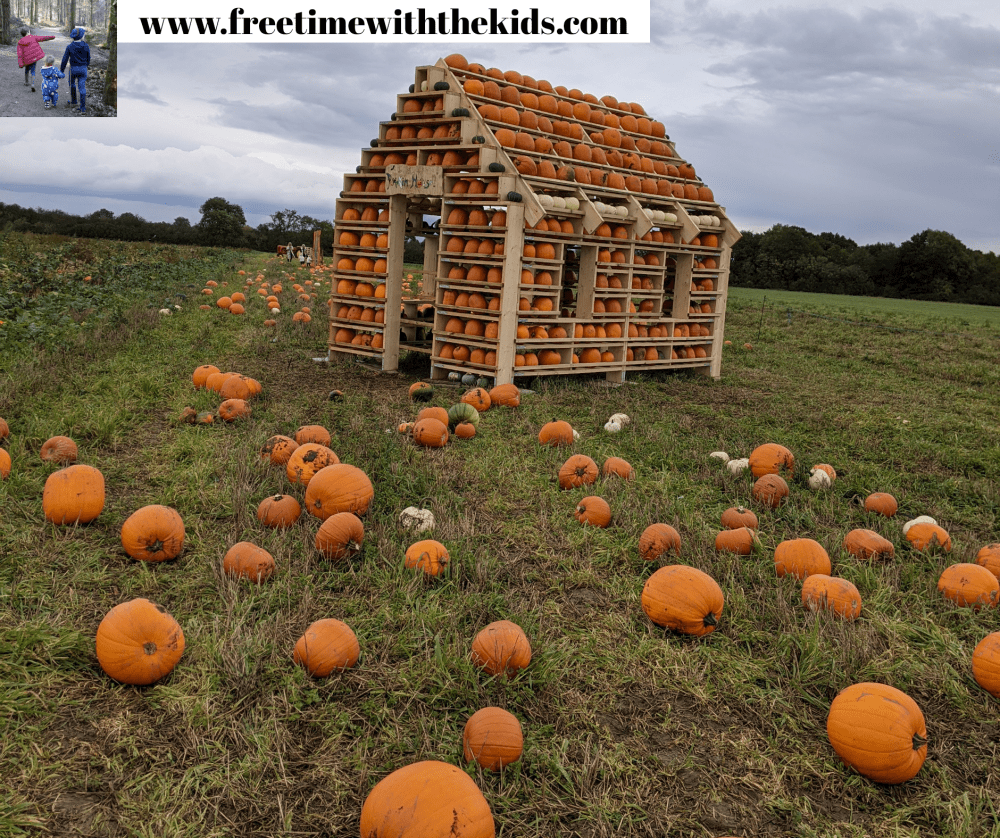 The Patch MK, pumpkin patch | Review by Free Time with the Kids | Pumpkin patches in Milton Keynes, Buckinghamshire