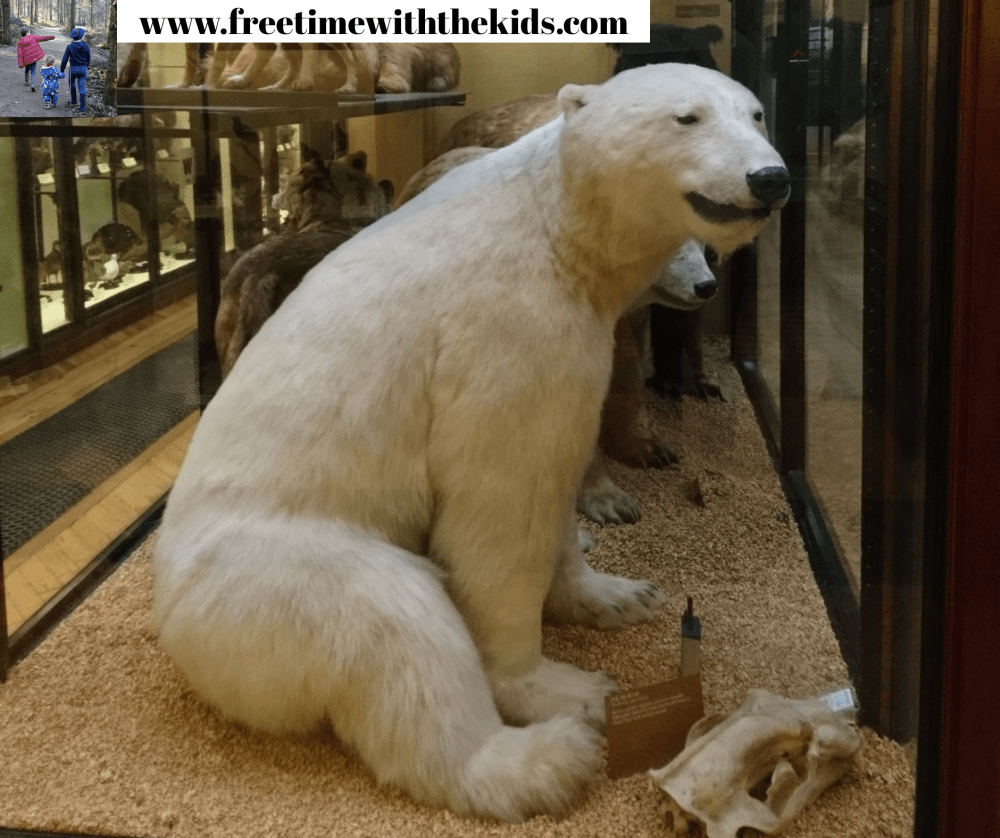 Tring Natural History Museum, Hertfordshire | Review by Free Time with the Kids | Free family day out