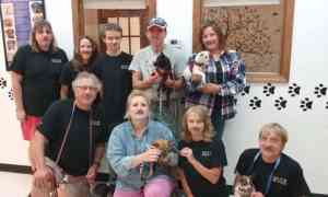 Volunteers wearing mustaches while holding dogs