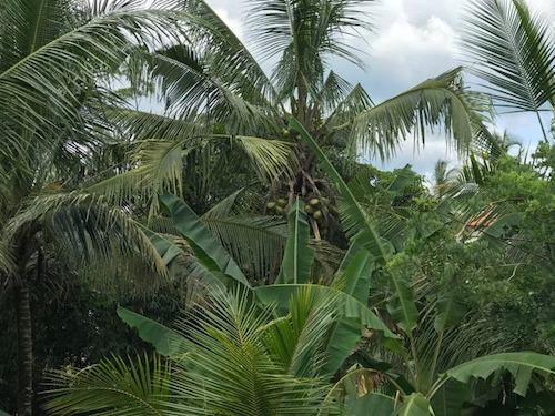 Tropical Thunderstorm Sound Effect