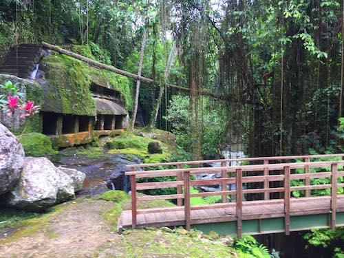 Jungle Sound Effects