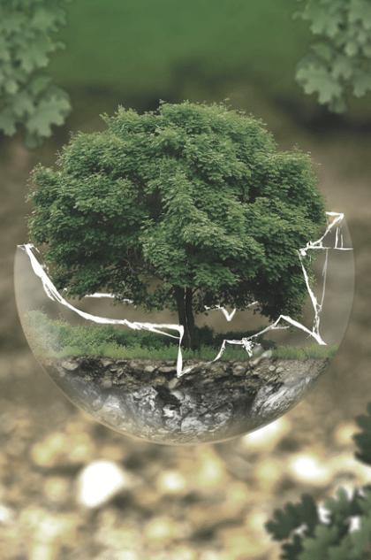 environmentalistfocus