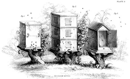 A detailed vintage illustration of three wooden bee hives