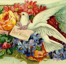 A lovely vintage birthday greeting of a white dove.