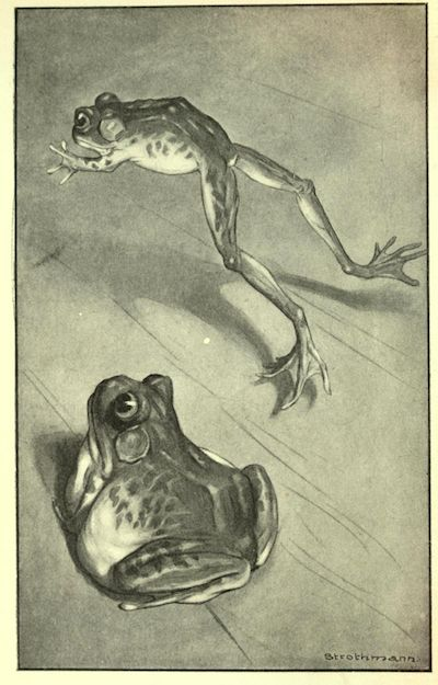Classic black and white vintage frog print