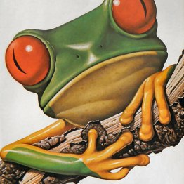 A rich, vibrant public domain print of a tree frog