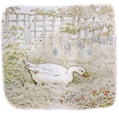 Public Domain vintage children's book illustration of a duck from Beatrix Potter
