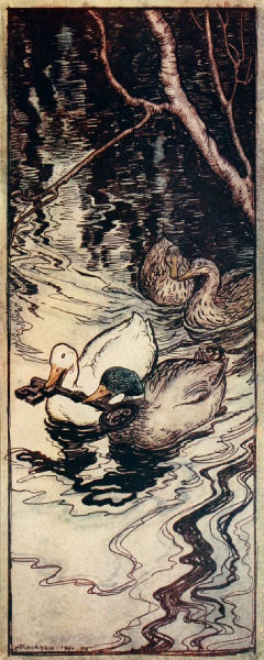 Free public domain vintage childrens illustrations of two ducks from grimms fairytales. Author Rackham artist