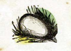 public domain egg illustration vintage childrens books
