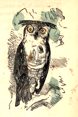 public domain owl illustration vintage childrens books