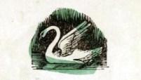 public domain swan illustration vintage childrens books