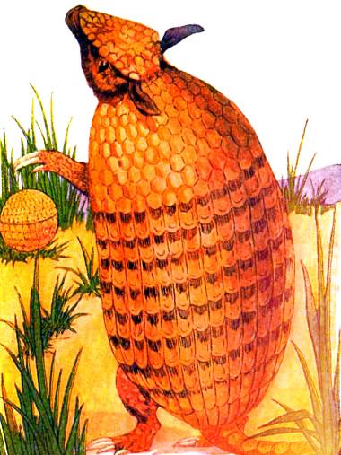 public domain vintage antique childrens book illustration of armadillo