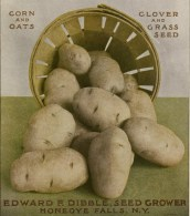 This is a free vintage illustration of potatoes from an antique gardening magazine