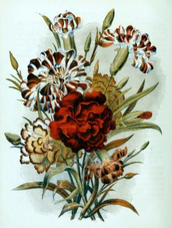 free antique book illustrations of roses lillies and country flowers