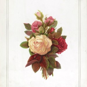 This is a free vintage public domain rose image for mothers day