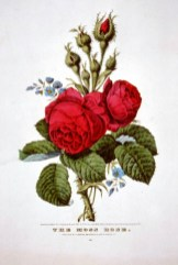 vintage public domain wild red roses card for mothers day 1