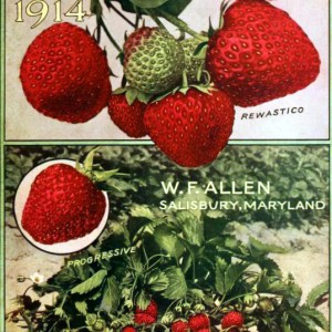 A free vintage berry catalog featuring fresh strawberries on its cover