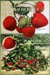 fresh vintage strawberries and strawberry bush antique garden magazine cover