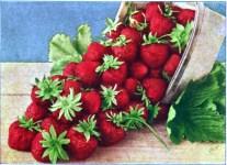vintage basket of strawberries from antique gardening catalog